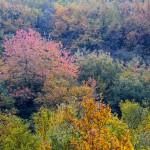 جلوه پاییز در گردنه حیران